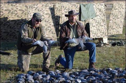 Uruguay Pigeons 1