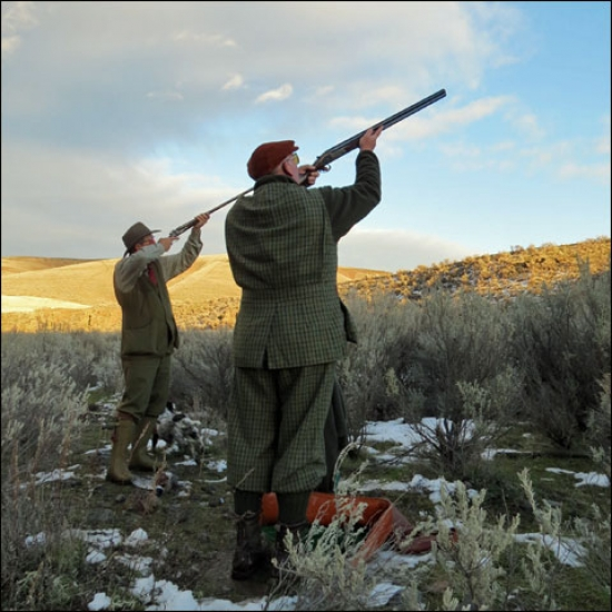 Driven Pheasants at Highland Hills Ranch With Chris Batha