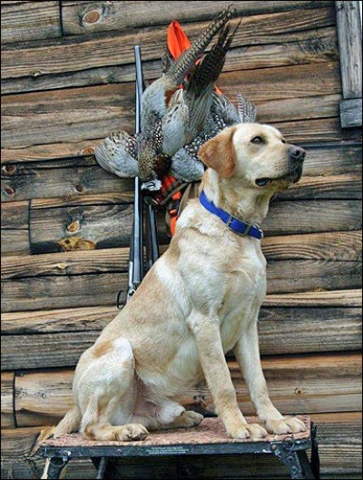 Selecting a Great Bird Dog: It's All About Managing Your Expectations