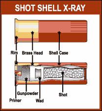 Shotgun Shells - Shotgun Life