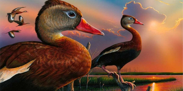 Federal Duck Stamps on Sale June 26