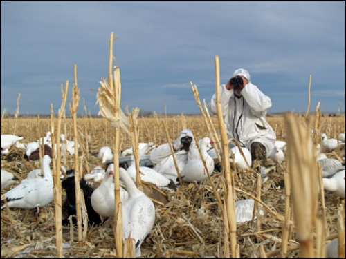 Unlimited Snows: Late Season Snow Goose Hunts are an Experience of a Lifetime